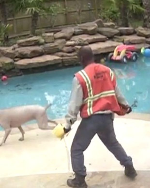 Worker Hits Family's Dogs With Wrench (Video) Promo Image