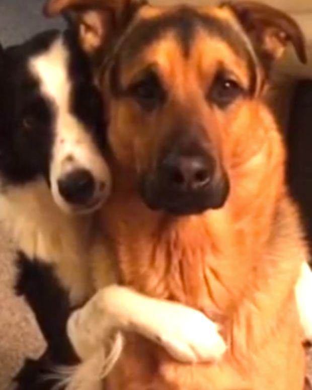 Dog Hugs Dog