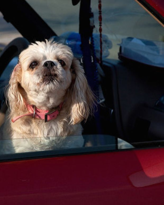 Michigan: Dogs Left In Hot Cars May Become A Felony Promo Image