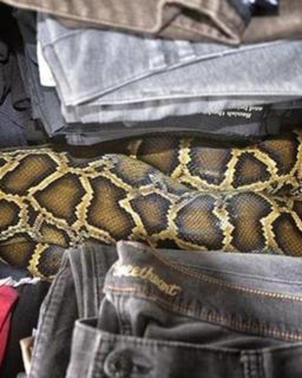Miami Flea Market Snake.
