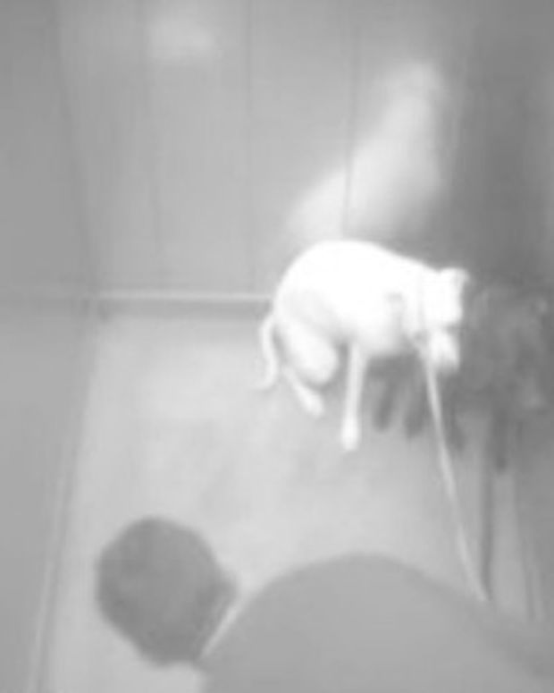 Man Behind Bars For Beating Girlfriend's Dog (Video) Promo Image