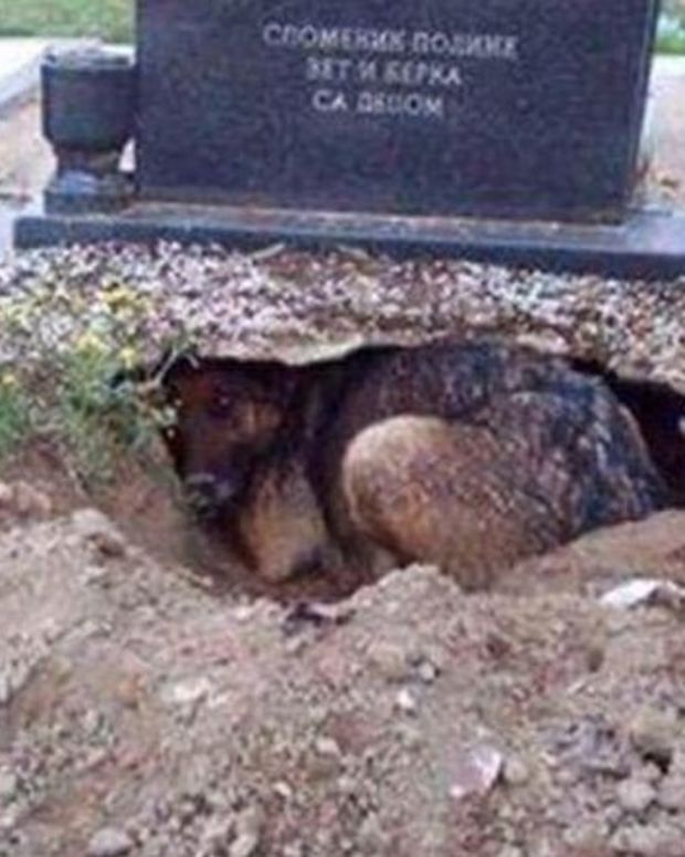 This 'Grieving' Dog Is Not Doing What You Think (Photos) Promo Image