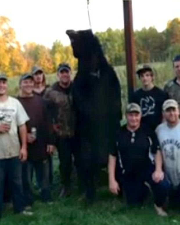 Virginia man kills 650 pound black bear during hunting trip black bear gets shot by hunters then decides to turn tables on the attackers publicscrutiny Choice Image