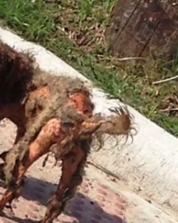 Stray Dog Is Rescued After Photo Goes Viral (Video) Promo Image