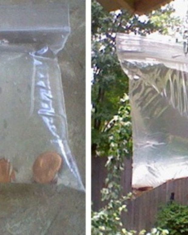 If You See Ziploc Bags Full Of Pennies In Your Neighbors' Yards, Here's Why They're Up There Promo Image