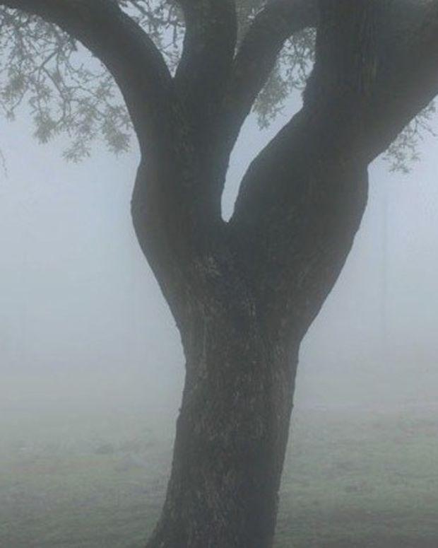 Alleged Burglar Dies After Homeowner Ties Him To Tree Promo Image
