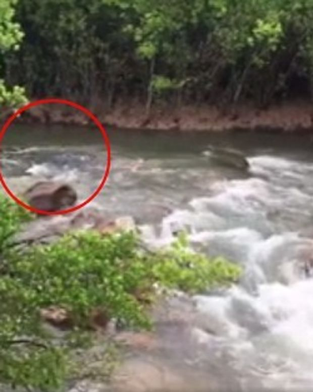 Monster Crocodile Seen In Australian River: Video Promo Image