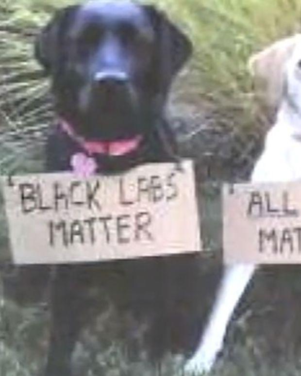 San Francisco Police Union: 'Black Labs Matter' (Video) Promo Image