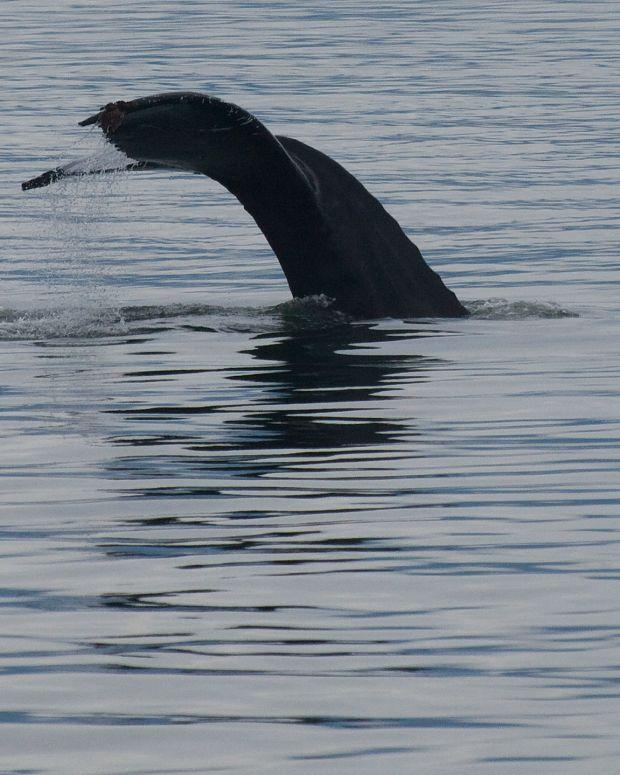 Giant Sea Creature On Beach Sparks Curiosity (Photo) Promo Image