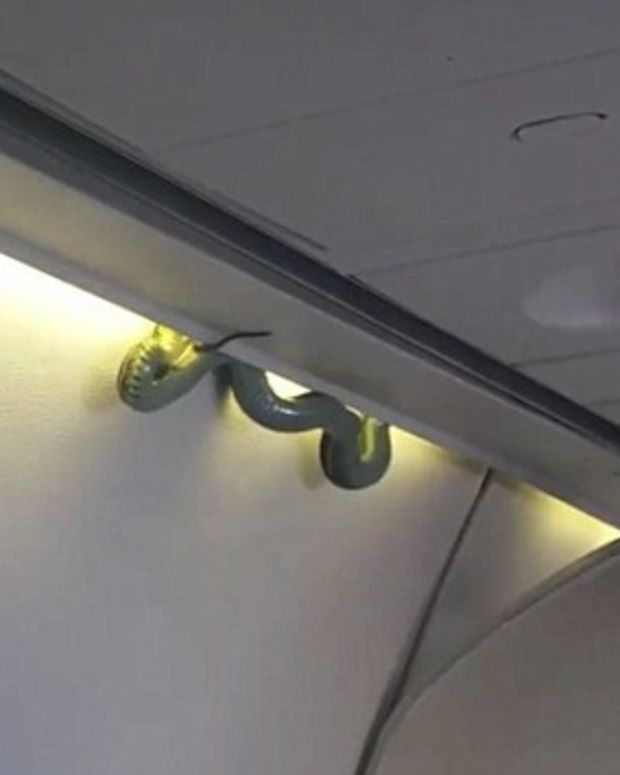 Snake Causes Emergency Landing On Plane (Video) Promo Image