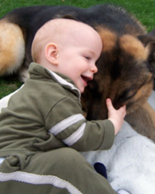 Dog Meets Newborn Baby, Becomes Her Guardian Angel (Video) Promo Image