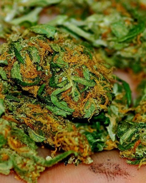 Bill Would Ban Marijuana Purchases With EBT Cards Promo Image