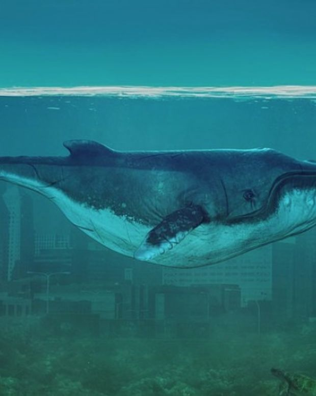 Police Warn Parents About Deadly 'Blue Whale Challenge' Promo Image