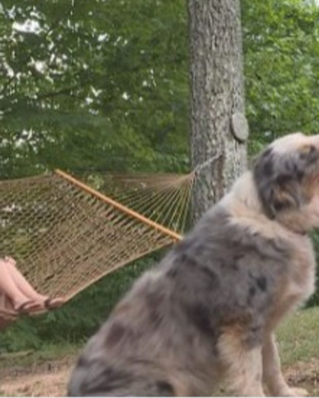 Dog Saves Toddler From Venomous Copperhead Snake Promo Image