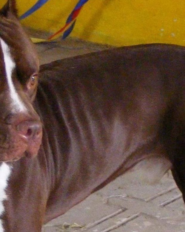 Grandmother Mauled To Death By Pit Bull Promo Image