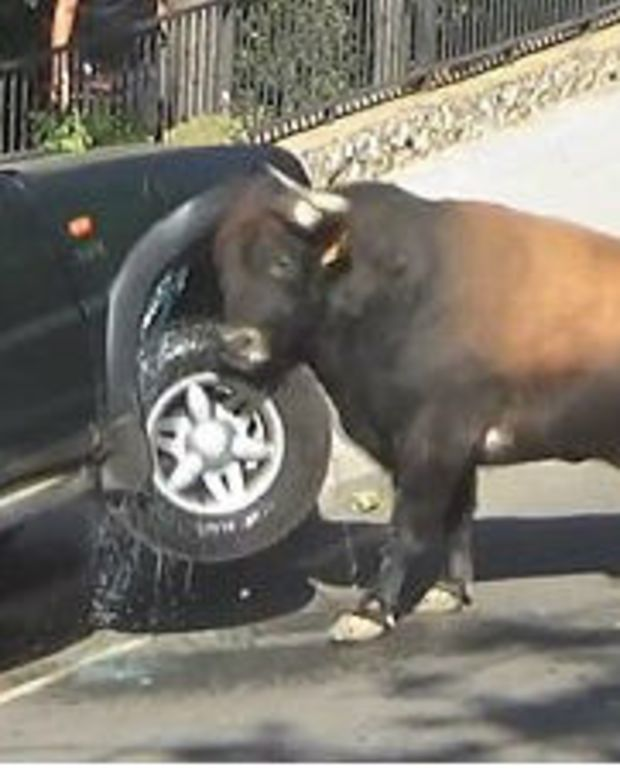 Raging Bull Smashes Into Terrified Family's Car (Video) Promo Image