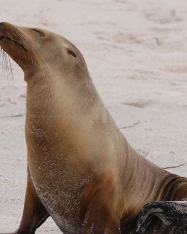 Sea Lion Pulls Girl Off Pier Into Water (Video) Promo Image