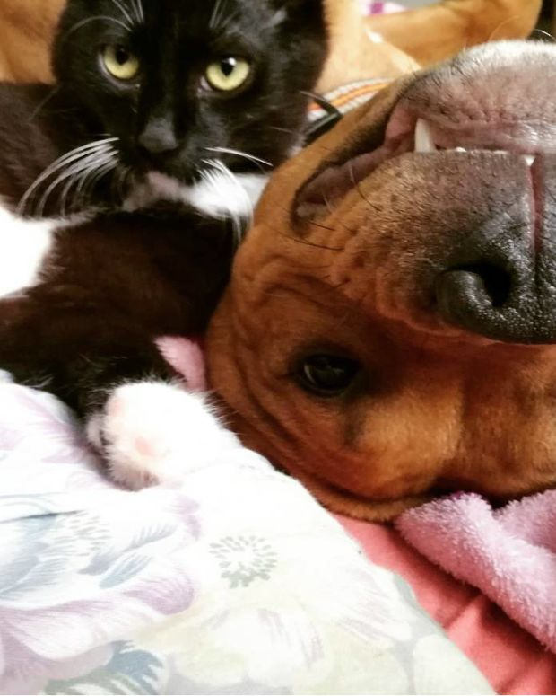Dog's Priceless Reaction When Owner Gets A Kitten (Video) Promo Image