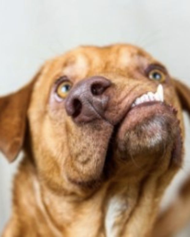 Animal Shelter Saves Dog With Misaligned Snout (Photos) Promo Image