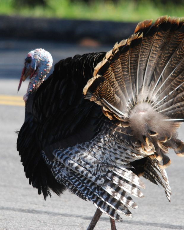 Walmart Greeter Fired After Wild Turkey Enters Store Promo Image