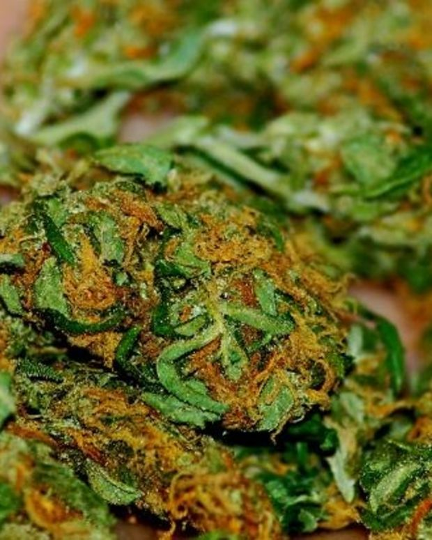 California Votes To Legalize Marijuana Promo Image
