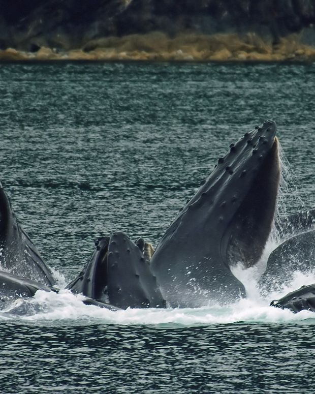 Whales Return To NYC After Decades Of Staying Away Promo Image