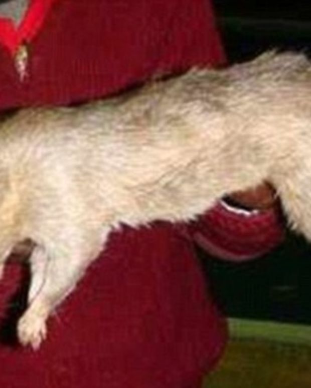 Giant Rats Eat Baby Alive After Mother Goes Partying Promo Image