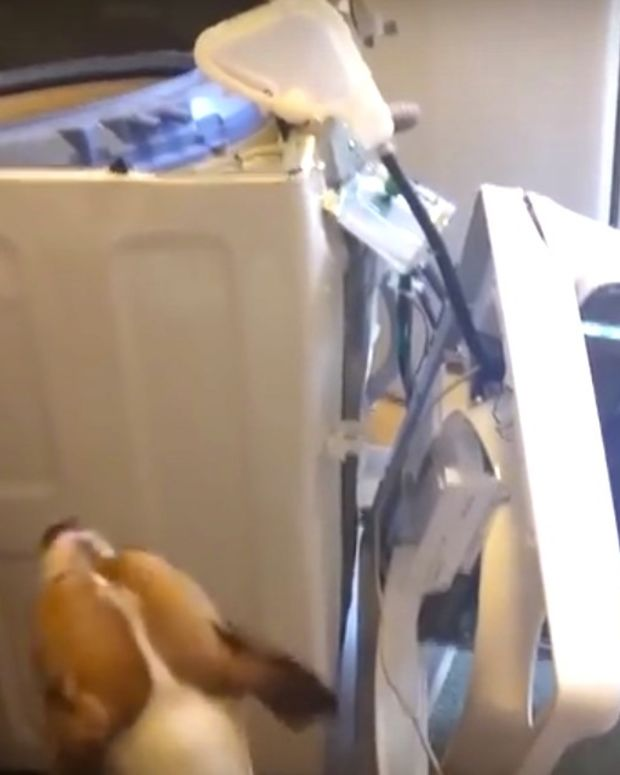 Report: Samsung Top-Loading Washing Machines Explode (Video) Promo Image