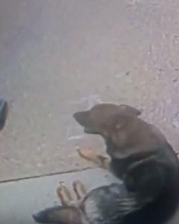 Burglars May Have Saved Dog's Life (Video) Promo Image