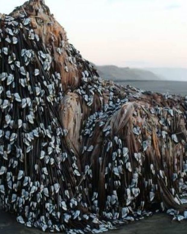Barnacle-Covered Object on Beach Baffles New Zealanders Promo Image