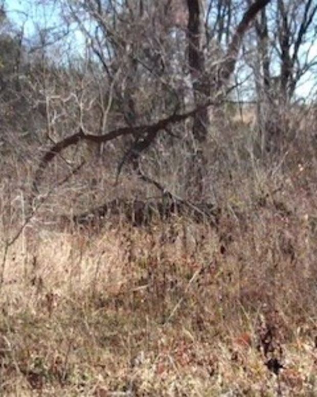 Can You See The Camouflaged Marine? (Photos) Promo Image
