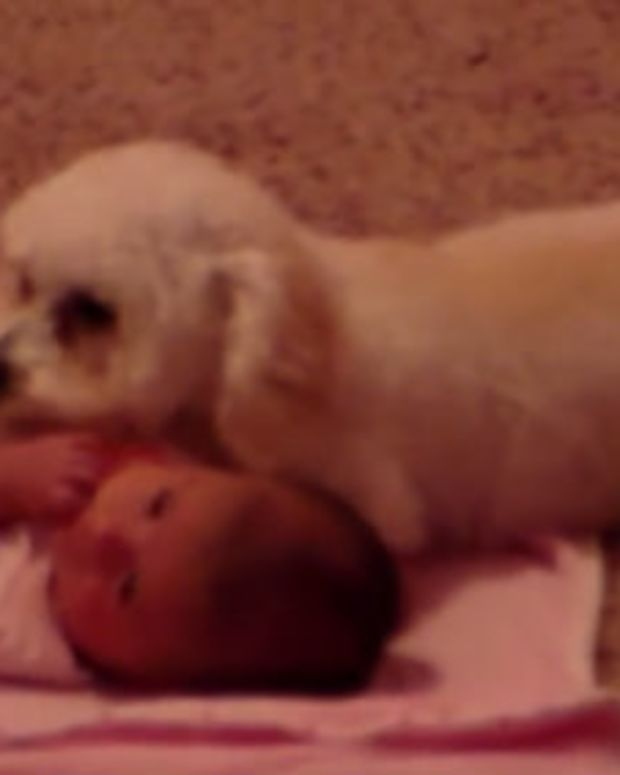 Dog Protects Baby From 'Danger' (Video) Promo Image
