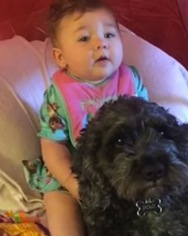 Dog Dies Protecting Baby From Fire (Video) Promo Image