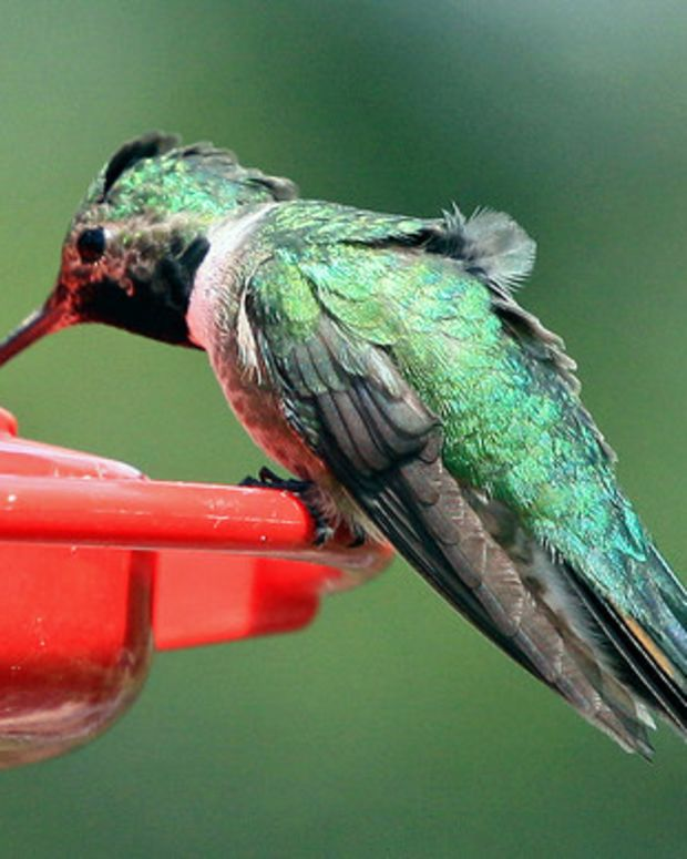 Man Goes Out Of His Way To Warm Cold Humming Birds (Video) Promo Image