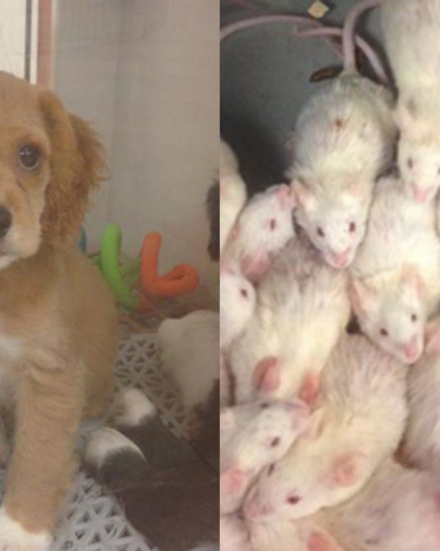 Shop In Big Trouble After Employee Exposes What They Do To Animals (Photos) Promo Image