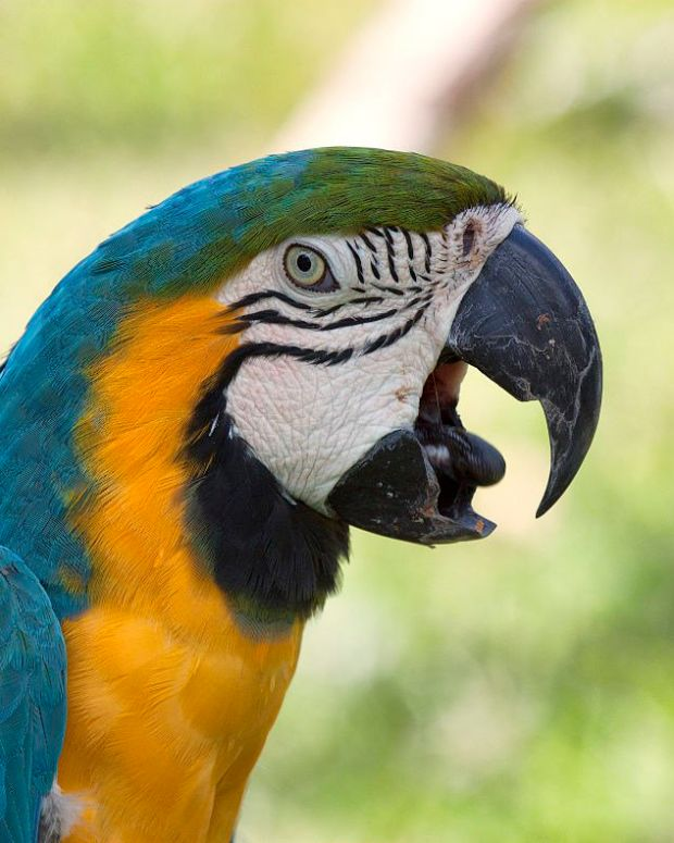 Police Respond To Woman Screaming For Help, Find Parrot (Photo) Promo Image