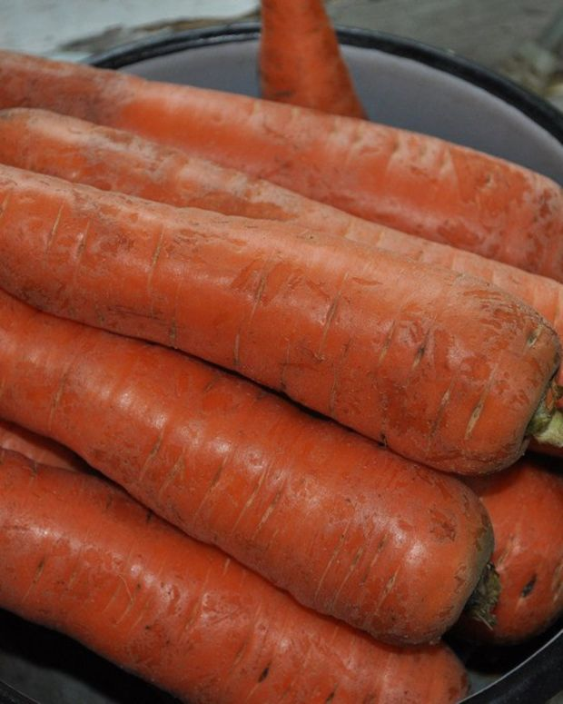 Woman Finds Lost Ring On Carrot (Photos) Promo Image