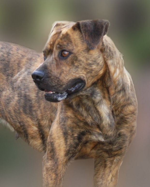Police Conclude Woman's Own Dogs Mauled Her To Death  Promo Image