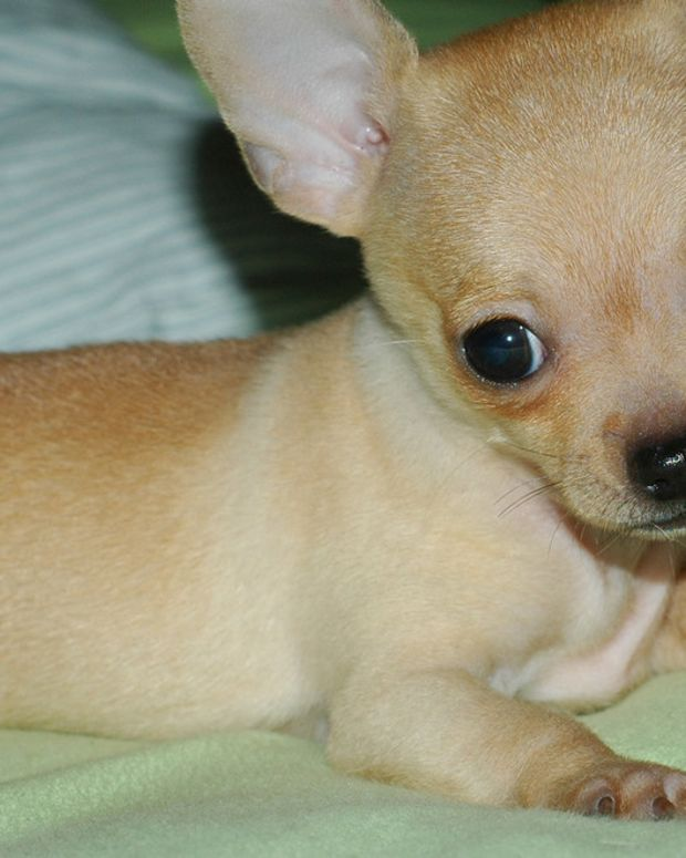 Abandoned Puppy At Airport Found With Tragic Note (Photo) Promo Image