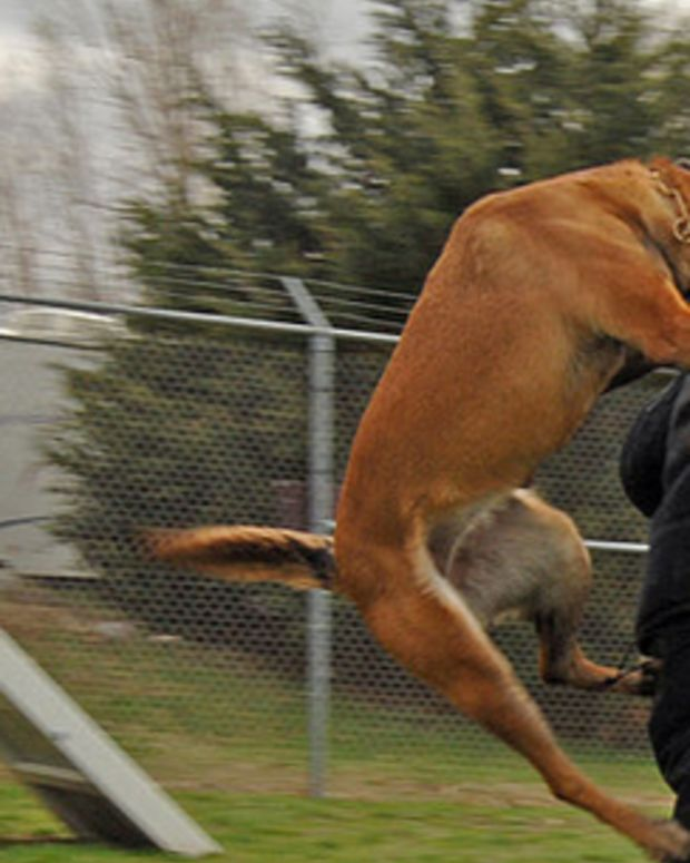 policedog_featured.jpg