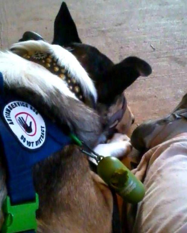 Autism Service Dog.