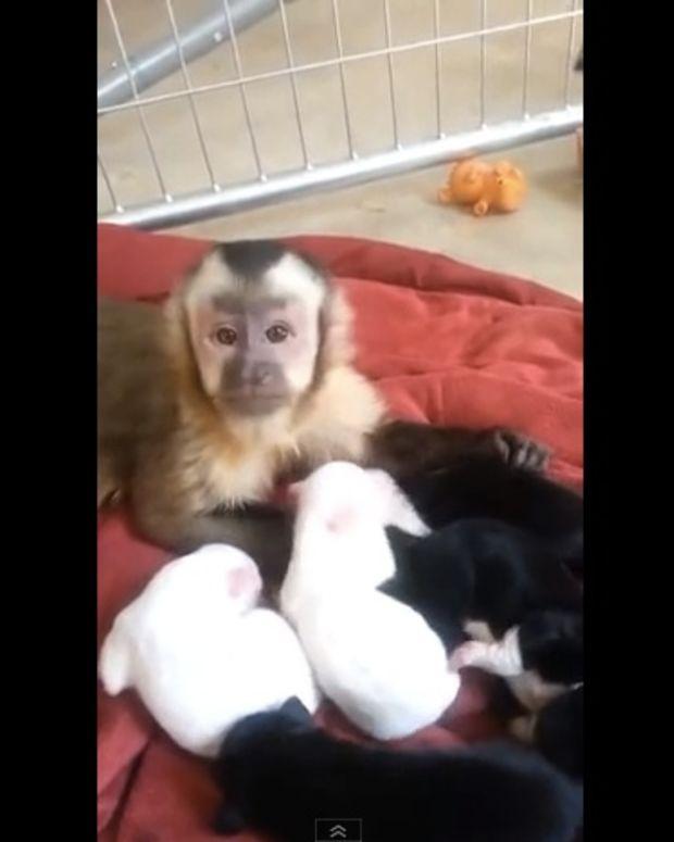 monkeyandpuppies1_featured.jpg