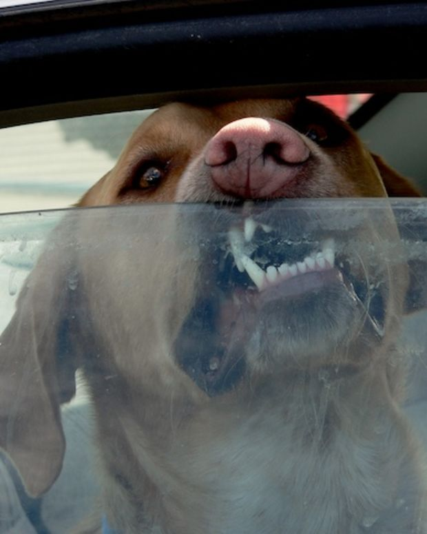 Dog In Hot Car.