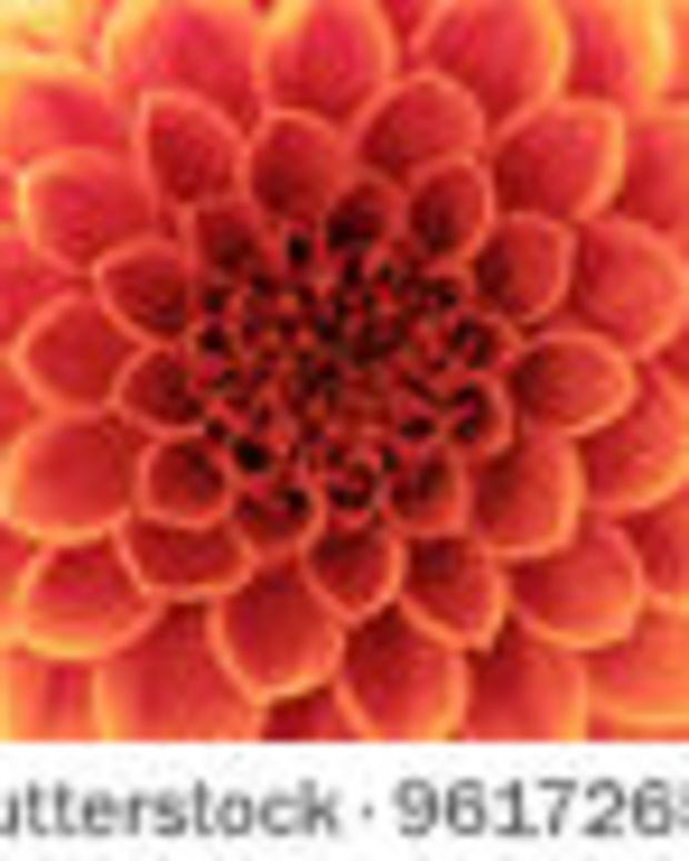 flower_featured_2.jpg