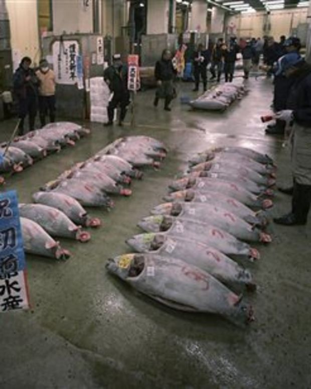 Tuna auction, Tokyo.