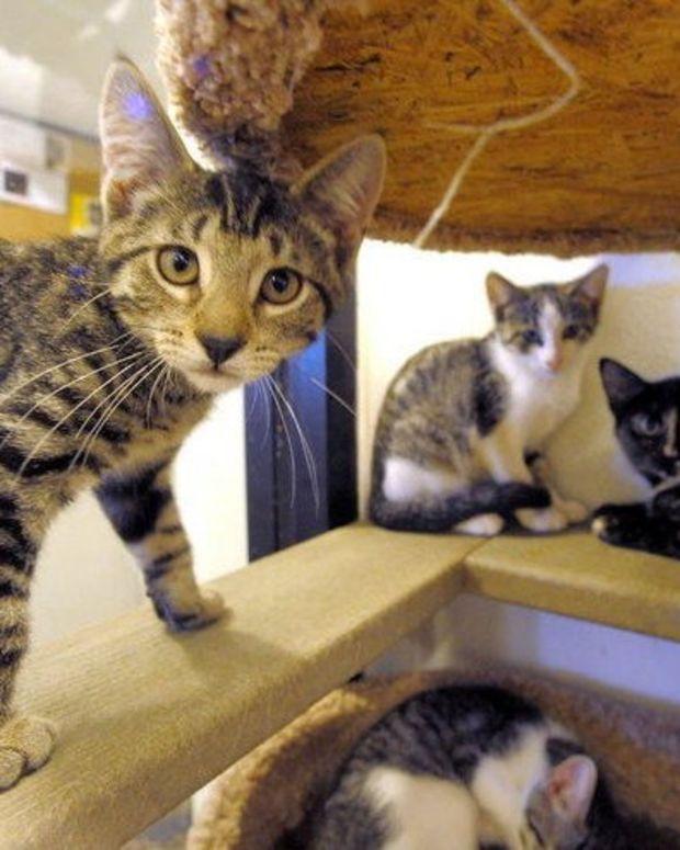 cat_featured_1.jpg