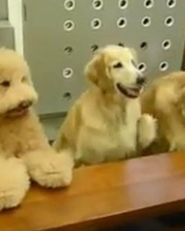 dogs_2.jpg