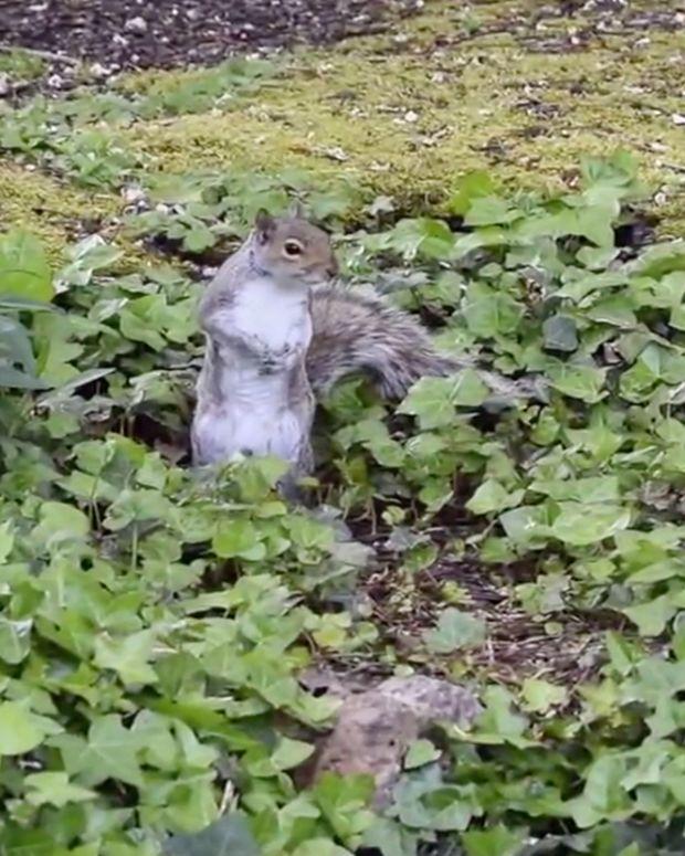 20170118_Squirrel_THUMB_SITE.jpg