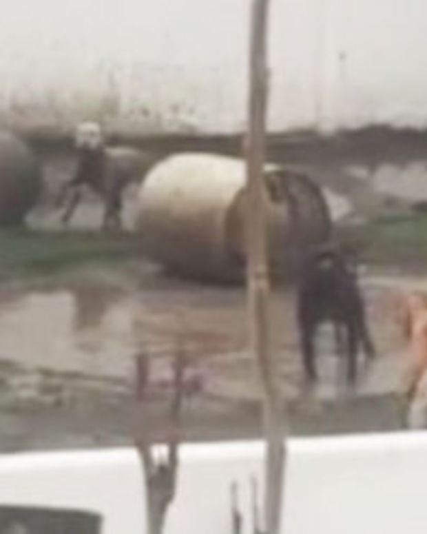 Masked Men Torture Dog Breeder, Police Say Promo Image
