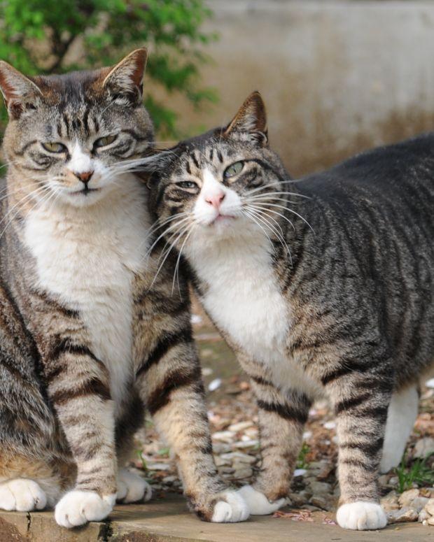 Florida Man Offers $20k Reward For 7 Missing Cats Promo Image
